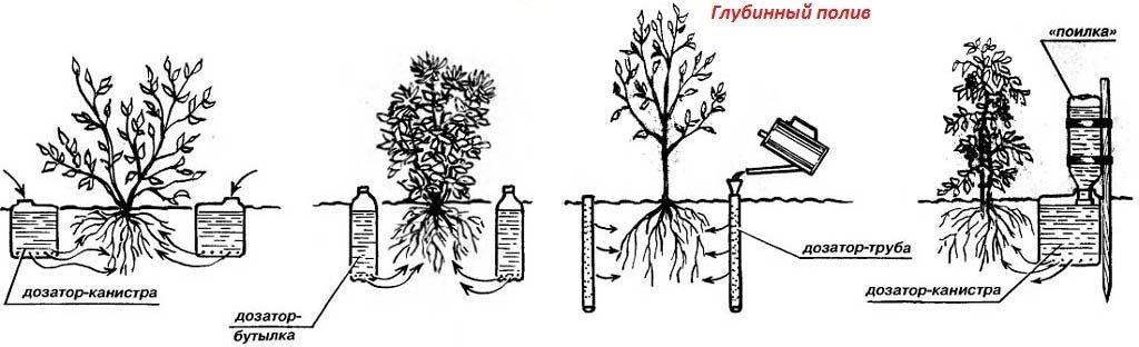 Подземное орошение корней
