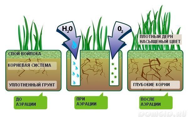 Аэрация почвы