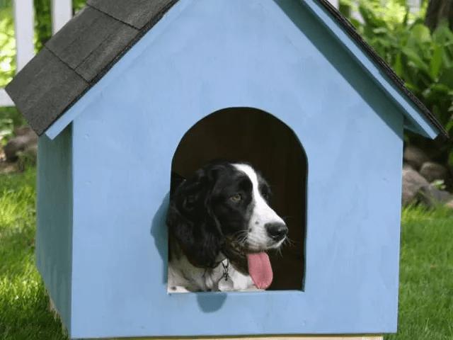 Собачья будка из фанеры