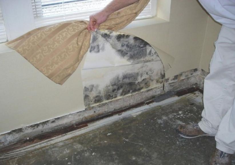 Как избавиться от плесени на стенах: выбор средства и этапы работ