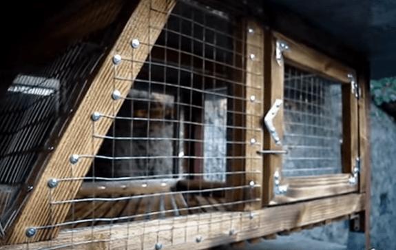 Готовая конструкция, на дверках простые задвижки из изогнутого гвоздя – чтобы кролики не ушли погулять