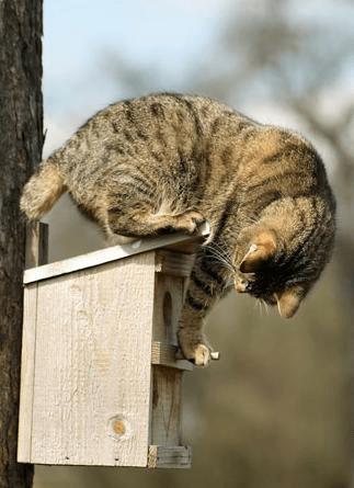 Кошка на скворечнике