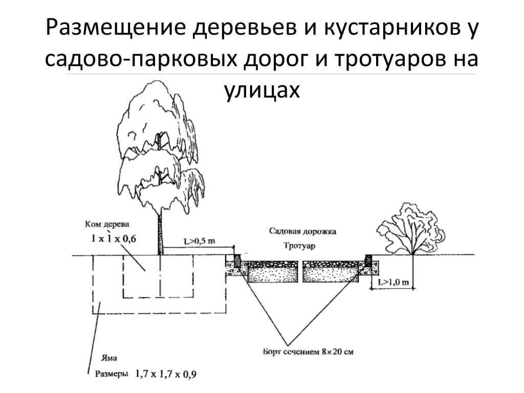 Размещение деревьев и кустарников рядом с дорожками